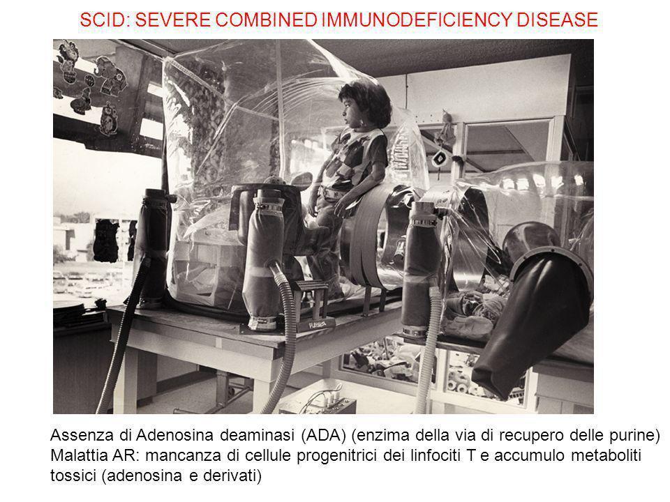 SCID: SEVERE COMBINED IMMUNODEFICIENCY DISEASE