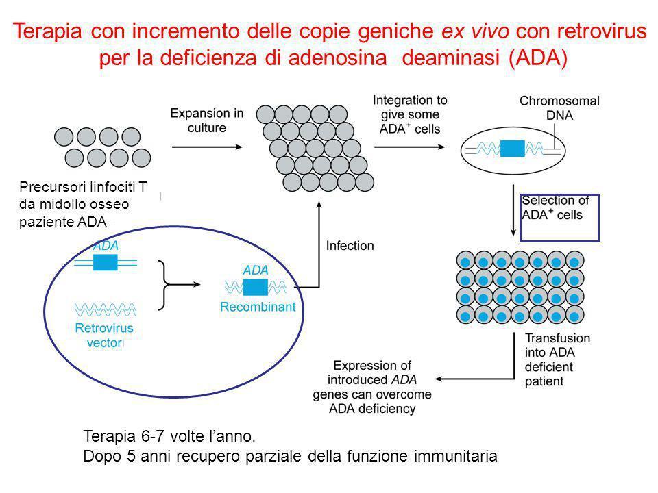 Terapia con incremento delle copie geniche ex vivo con retrovirus