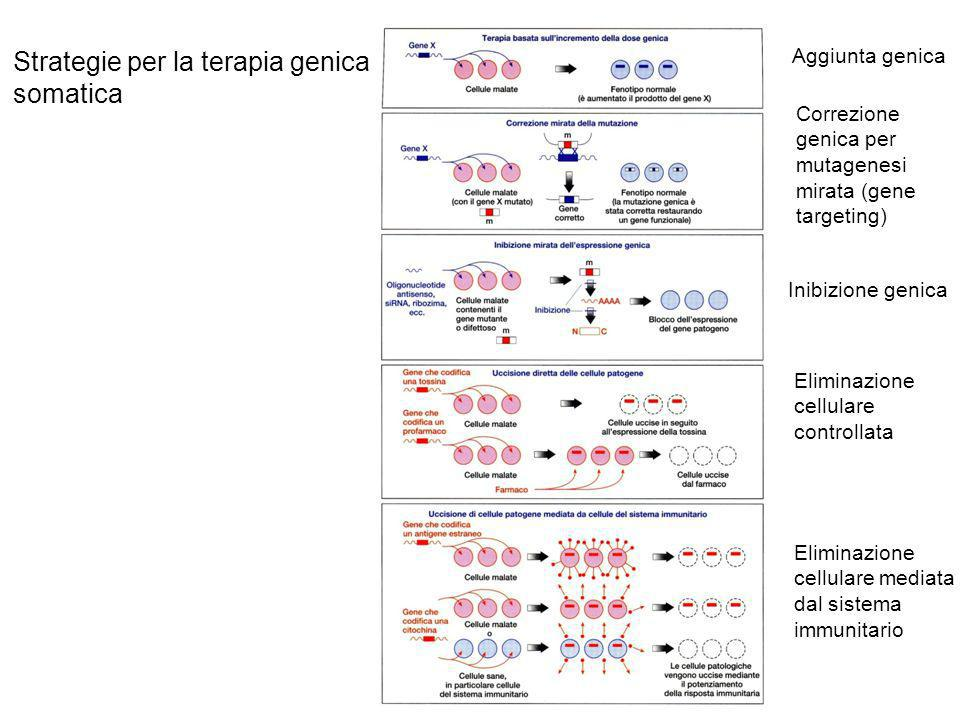 Strategie per la terapia genica somatica