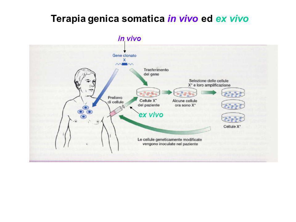 Terapia genica somatica in vivo ed ex vivo