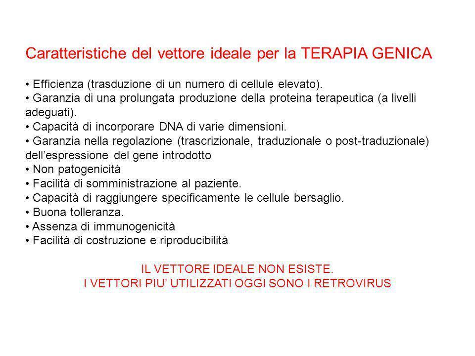 Caratteristiche del vettore ideale per la TERAPIA GENICA