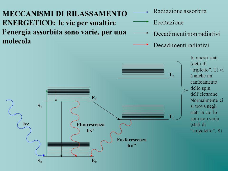 Radiazione assorbita Eccitazione. Decadimenti non radiativi. Decadimenti radiativi.