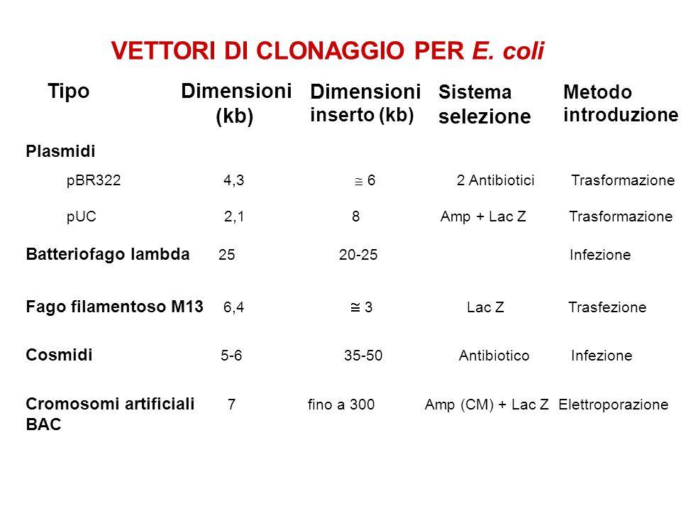 VETTORI DI CLONAGGIO PER E. coli