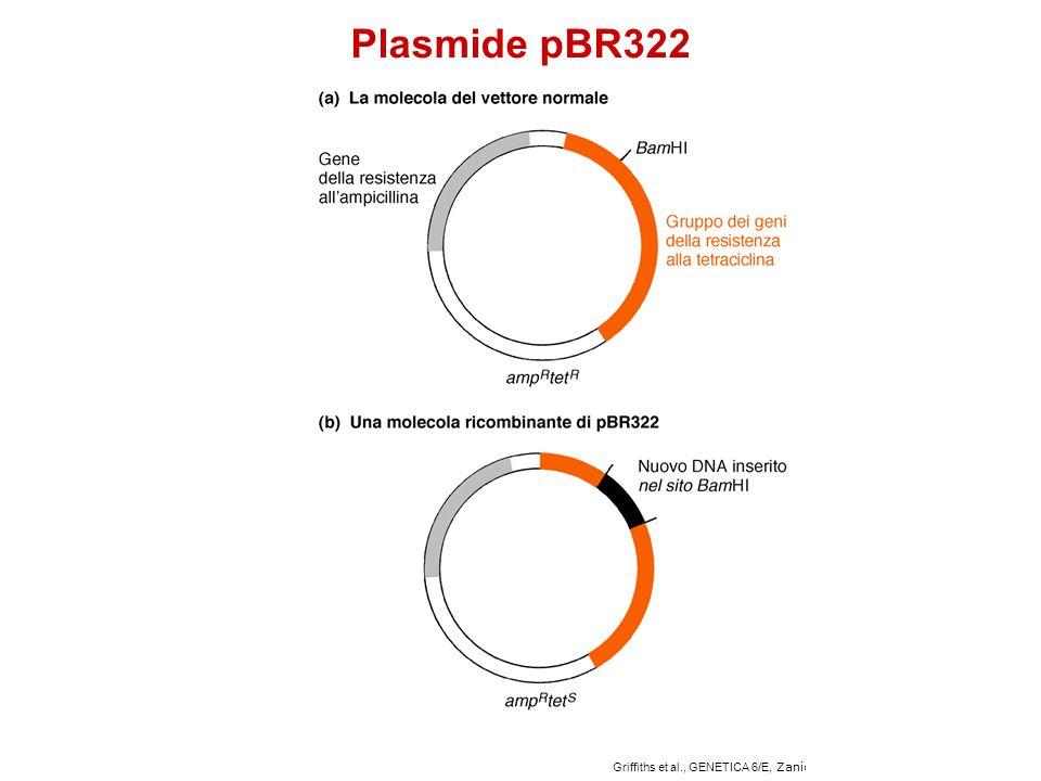 Plasmide pBR322 Griffiths et al., GENETICA 6/E, Zanichelli Editore S.p.A. Copyright © 2006