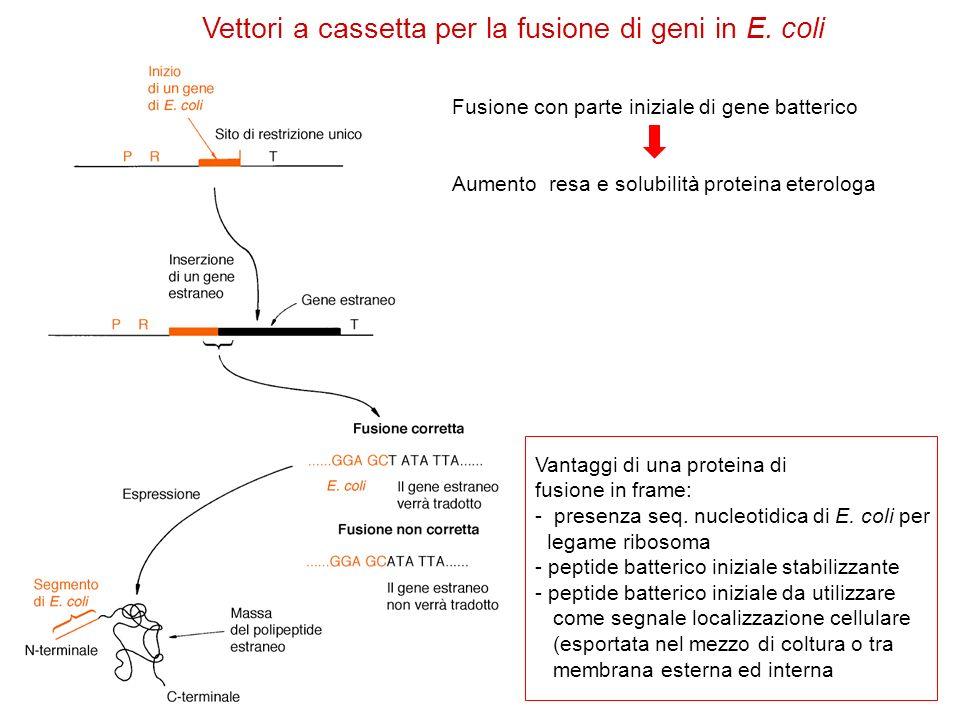 Vettori a cassetta per la fusione di geni in E. coli