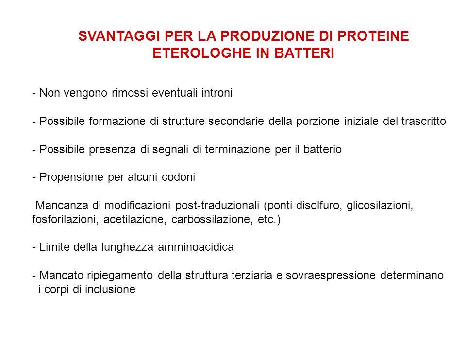 SVANTAGGI PER LA PRODUZIONE DI PROTEINE ETEROLOGHE IN BATTERI