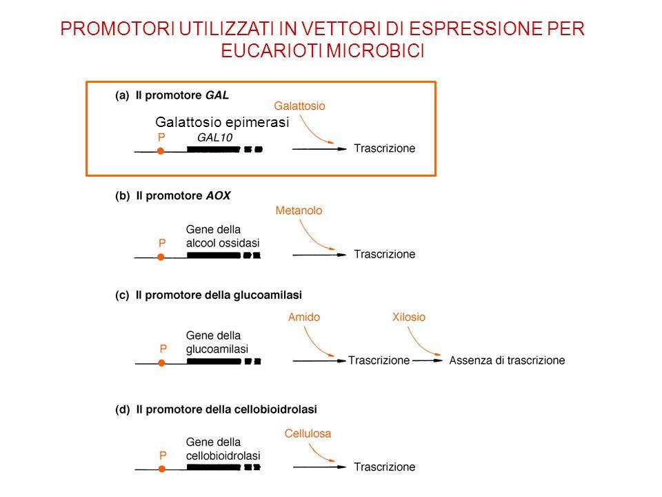 PROMOTORI UTILIZZATI IN VETTORI DI ESPRESSIONE PER EUCARIOTI MICROBICI
