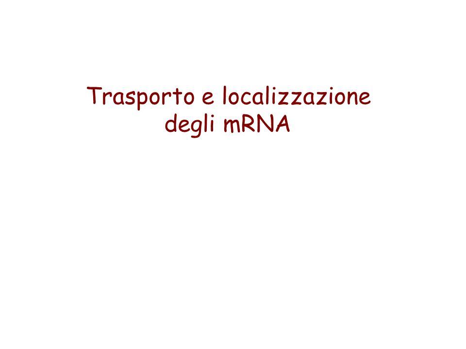 Trasporto e localizzazione