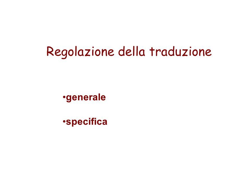 Regolazione della traduzione