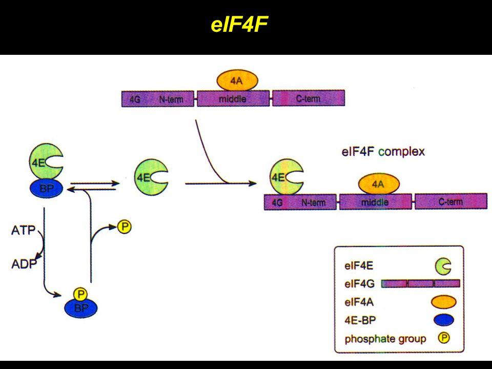 eIF4F