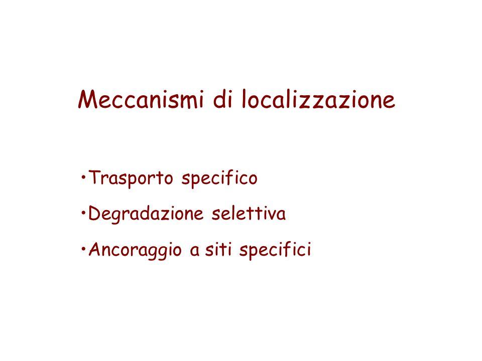 Meccanismi di localizzazione