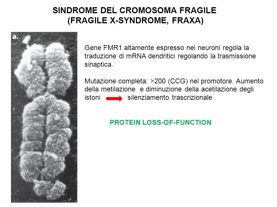 SINDROME DEL CROMOSOMA FRAGILE (FRAGILE X-SYNDROME, FRAXA)