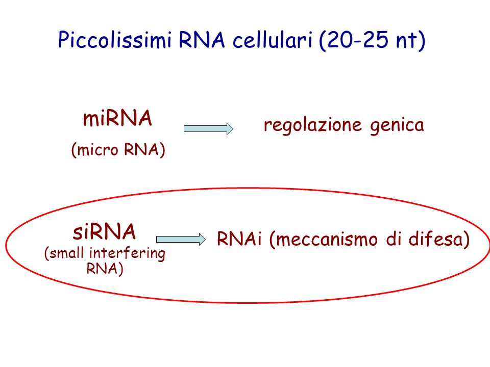 RNAi (meccanismo di difesa)