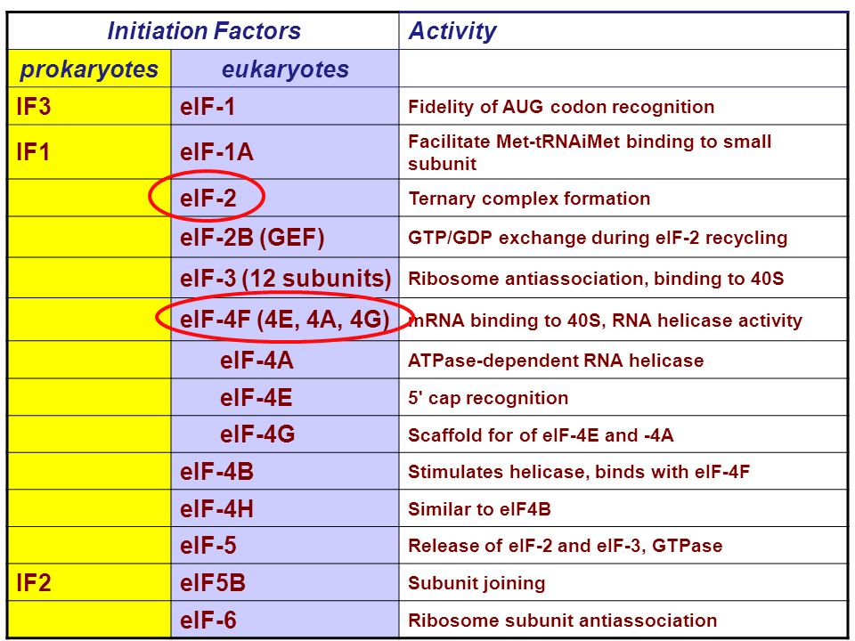 Initiation Factors prokaryotes eukaryotes