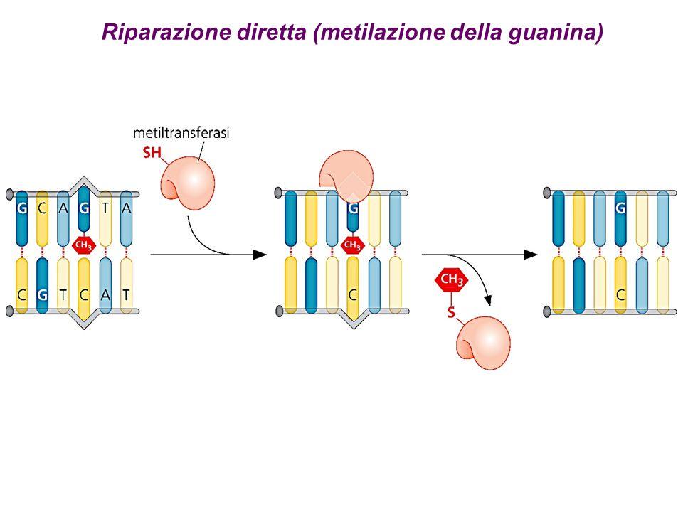 Riparazione diretta (metilazione della guanina)