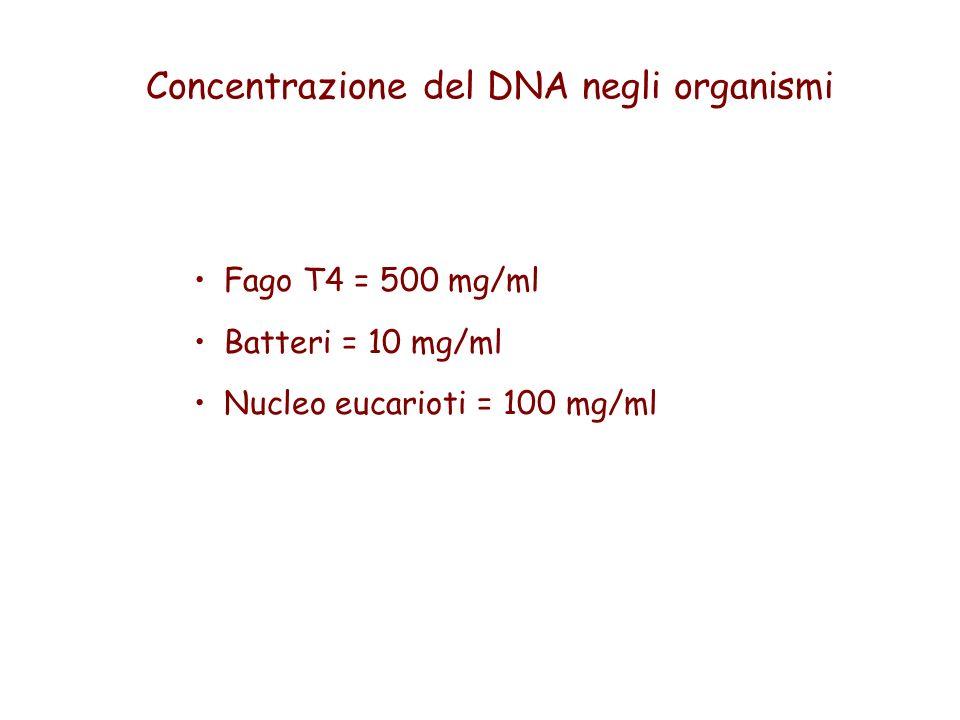 Concentrazione del DNA negli organismi