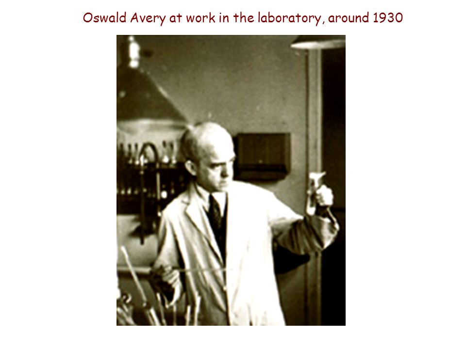 Oswald Avery at work in the laboratory, around 1930