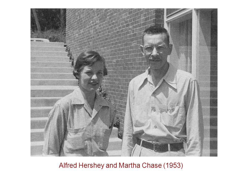 Alfred Hershey and Martha Chase (1953)