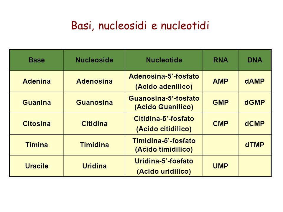 Basi, nucleosidi e nucleotidi