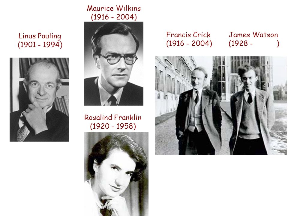 Maurice Wilkins (1916 - 2004) Linus Pauling (1901 - 1994)