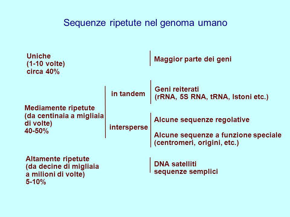 Sequenze ripetute nel genoma umano