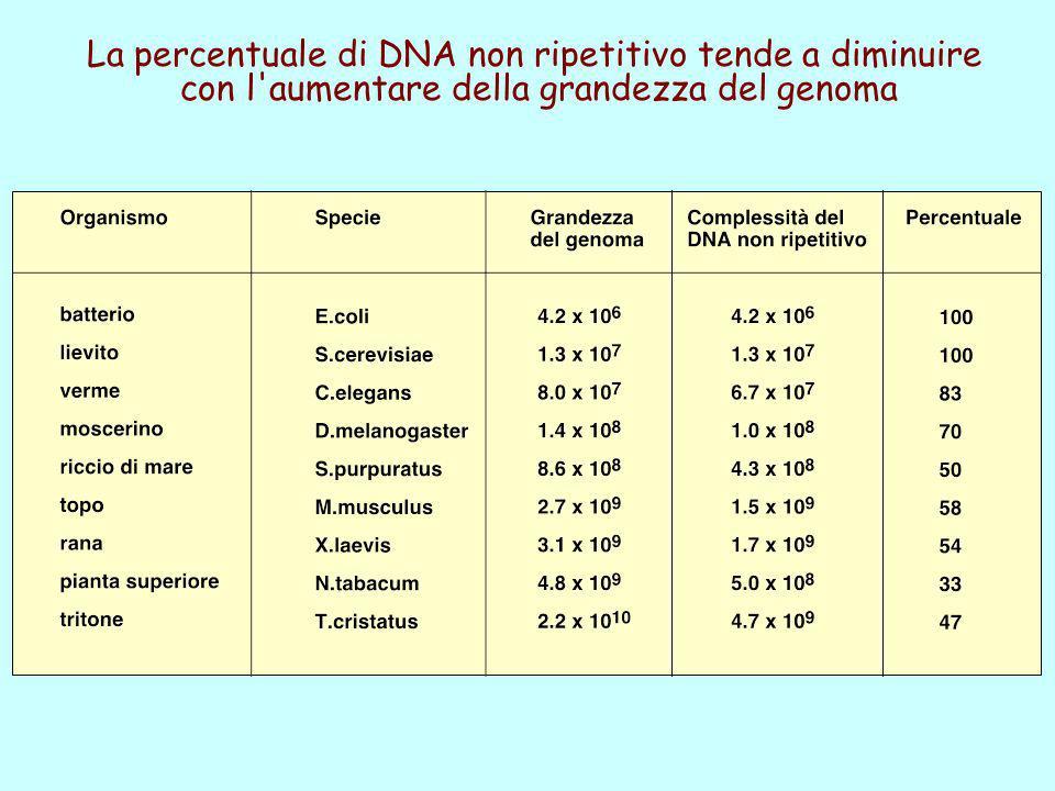 La percentuale di DNA non ripetitivo tende a diminuire