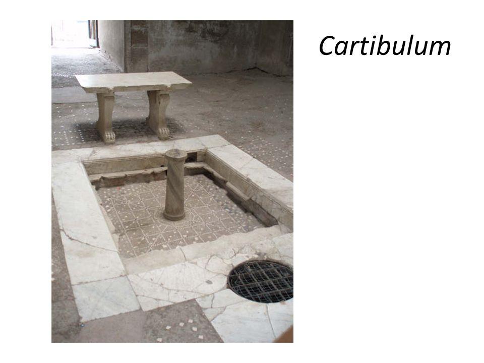 Cartibulum