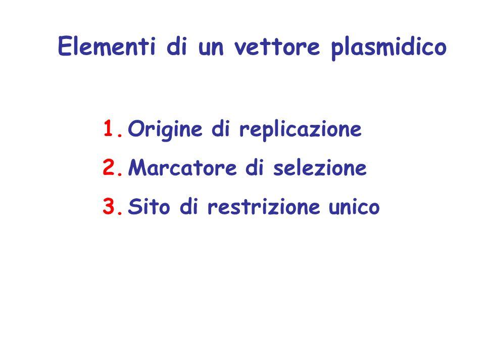 Elementi di un vettore plasmidico