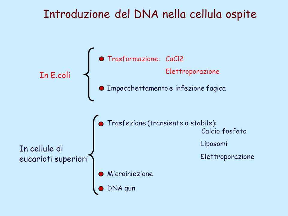 Introduzione del DNA nella cellula ospite