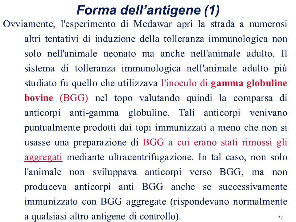 Forma dell'antigene (1)