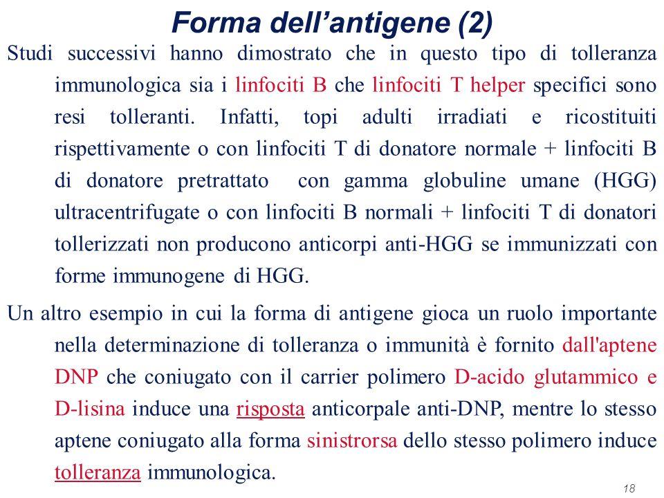 Forma dell'antigene (2)