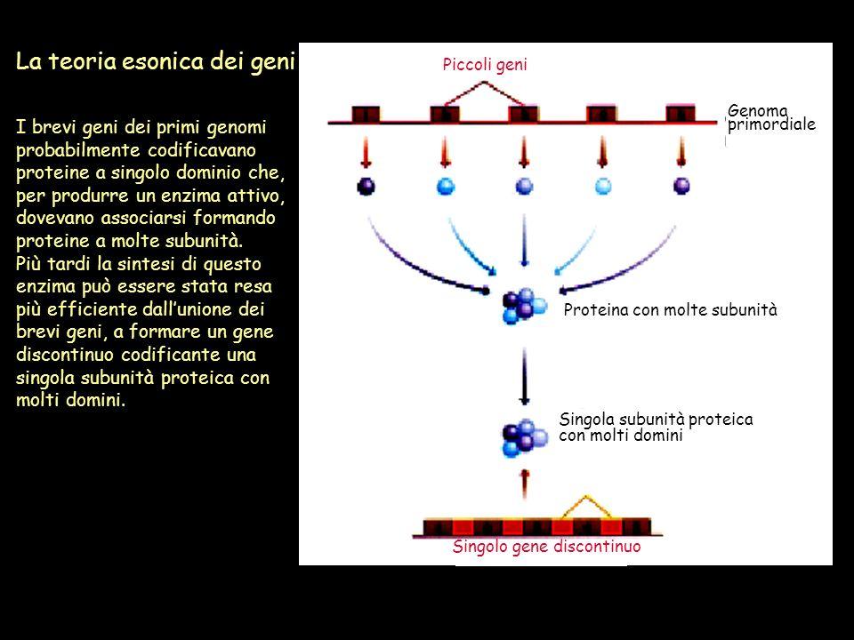 La teoria esonica dei geni