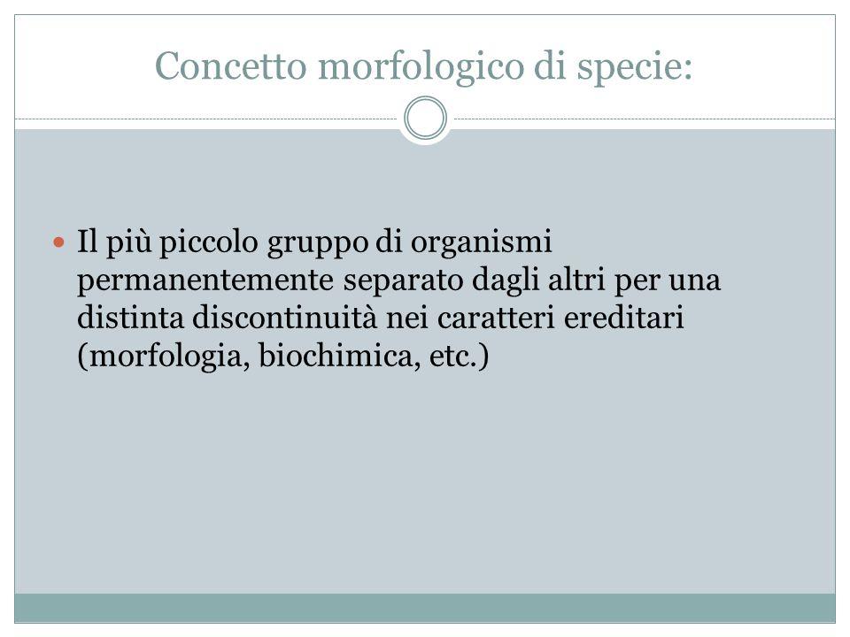 Concetto morfologico di specie: