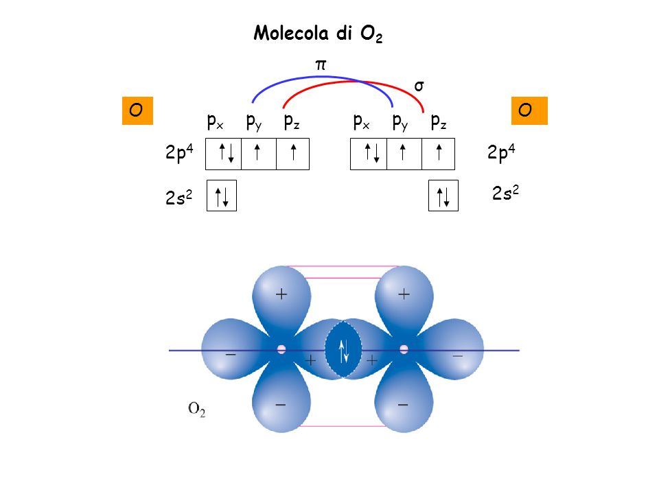 Molecola di O2 π σ O O px py pz px py pz 2p4 2p4 2s2 2s2