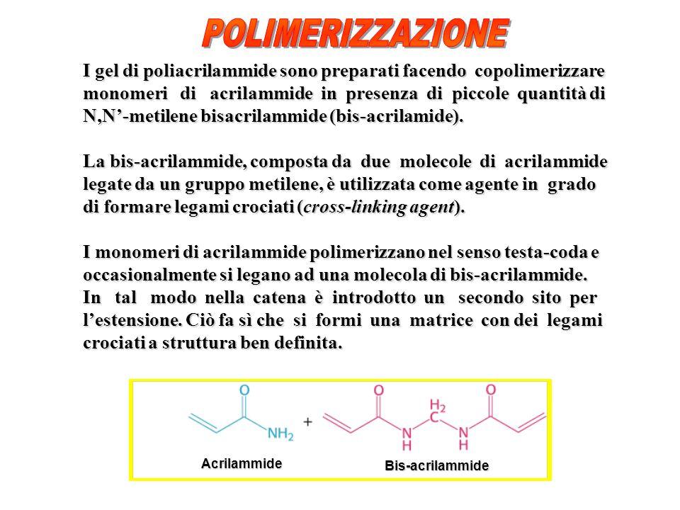 POLIMERIZZAZIONE I gel di poliacrilammide sono preparati facendo copolimerizzare.