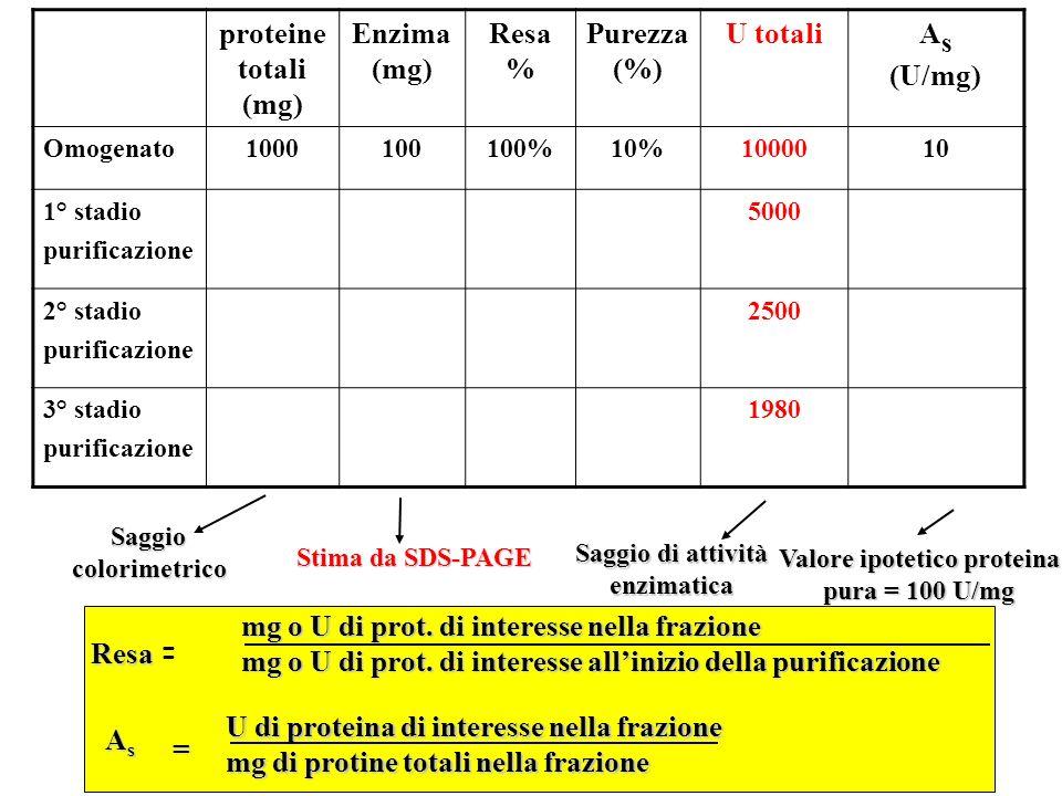 Valore ipotetico proteina pura = 100 U/mg