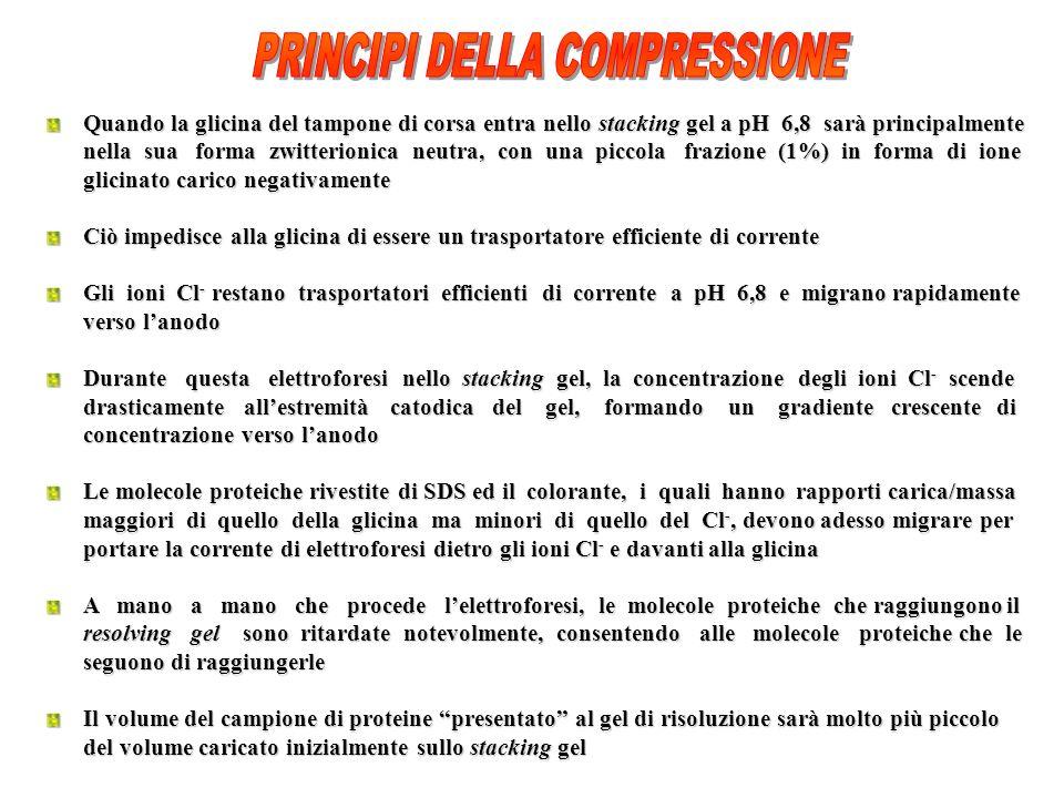 PRINCIPI DELLA COMPRESSIONE
