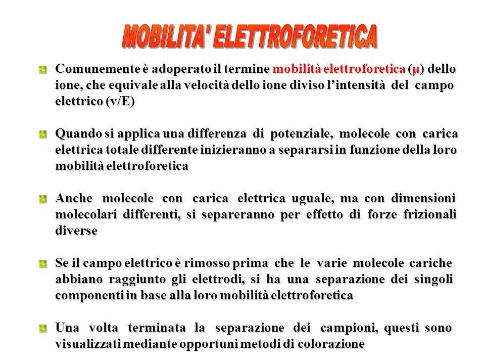 MOBILITA ELETTROFORETICA
