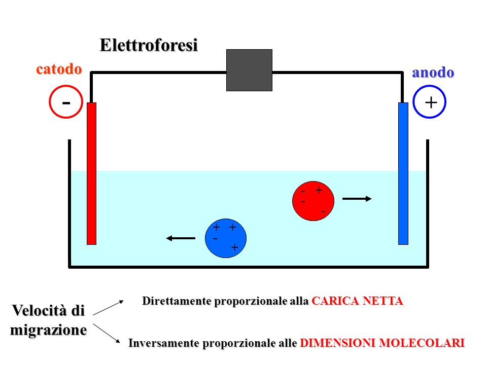 Inversamente proporzionale alle DIMENSIONI MOLECOLARI