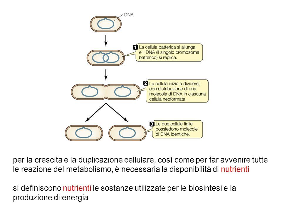 per la crescita e la duplicazione cellulare, così come per far avvenire tutte le reazione del metabolismo, è necessaria la disponibilità di nutrienti