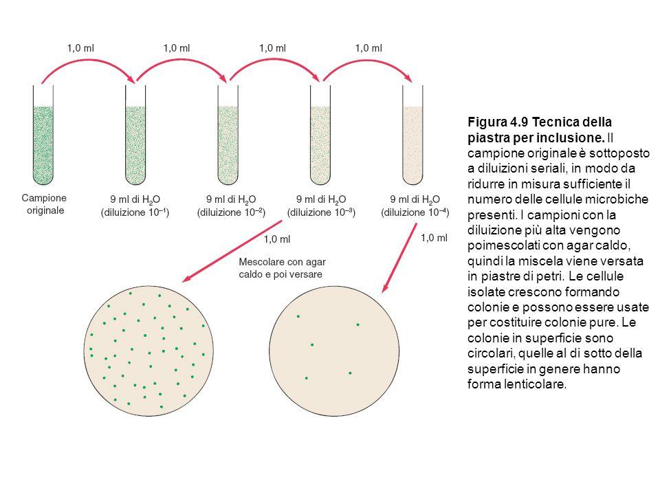 Figura 4. 9 Tecnica della piastra per inclusione