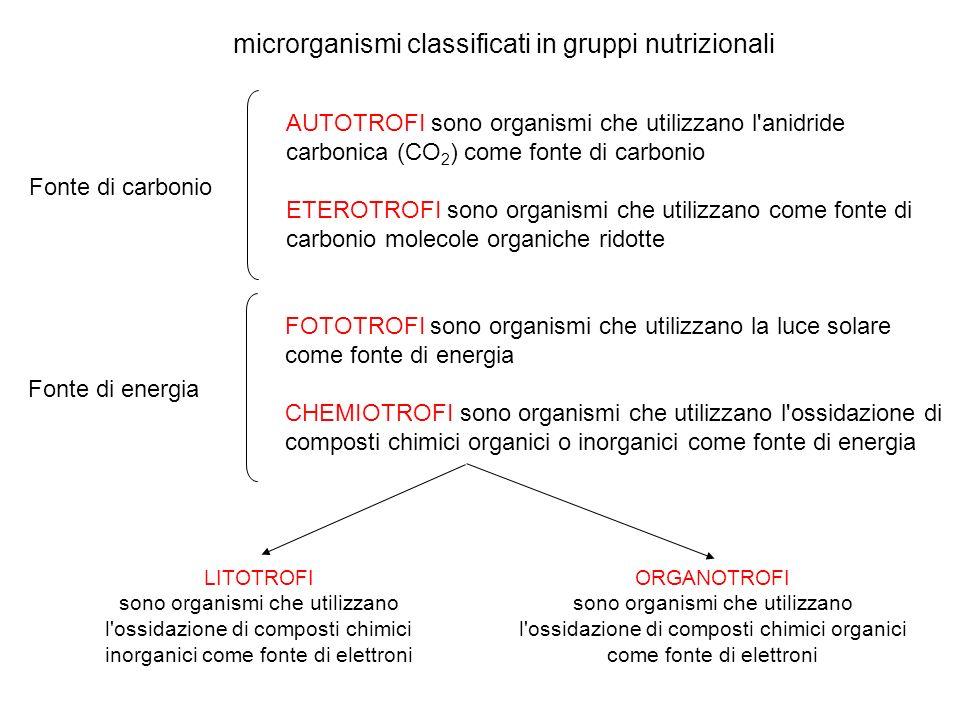 microrganismi classificati in gruppi nutrizionali