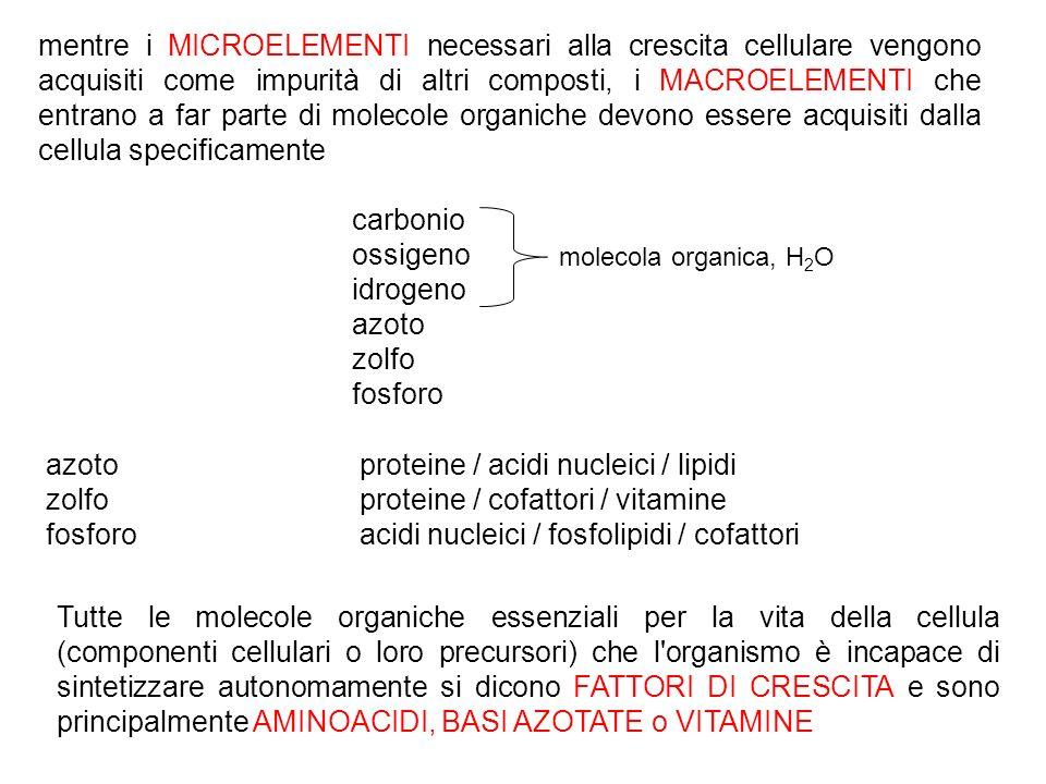 azoto proteine / acidi nucleici / lipidi