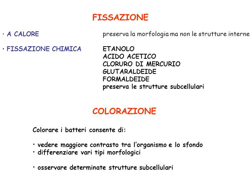 FISSAZIONE COLORAZIONE ACIDO ACETICO CLORURO DI MERCURIO GLUTARALDEIDE