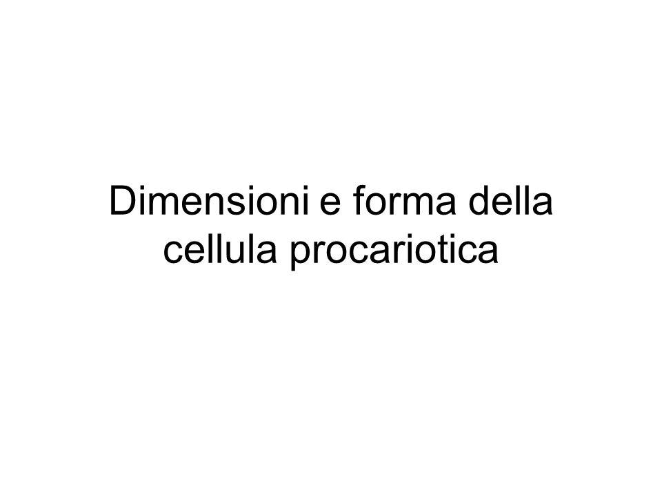 Dimensioni e forma della cellula procariotica