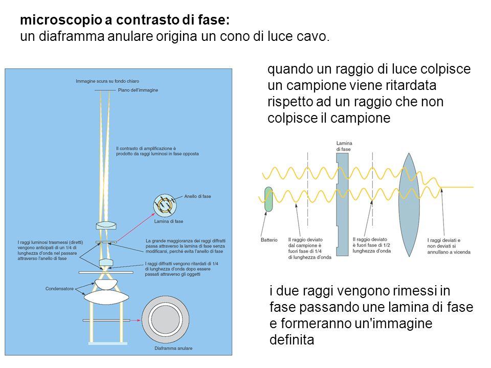 microscopio a contrasto di fase: