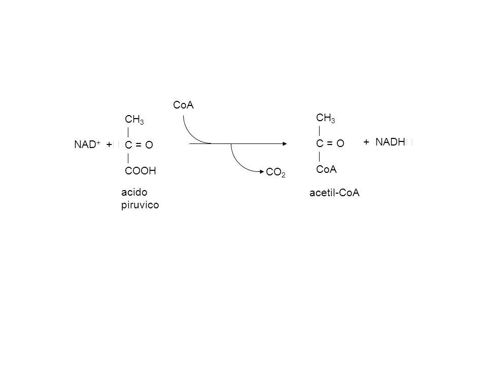acido piruvico CH3 C = O COOH CoA acetil-CoA CO2 NAD+ + + NADH