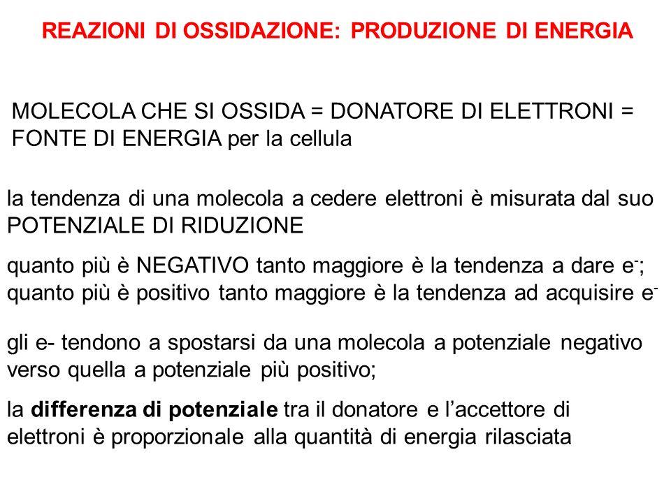 REAZIONI DI OSSIDAZIONE: PRODUZIONE DI ENERGIA