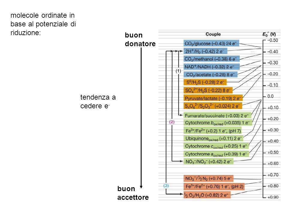 molecole ordinate in base al potenziale di riduzione: