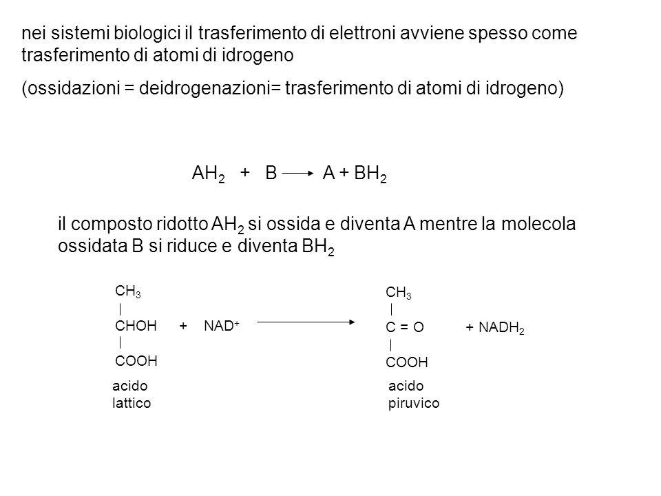 (ossidazioni = deidrogenazioni= trasferimento di atomi di idrogeno)